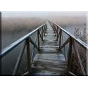20541-Niebla Bosque Pasarela Puente