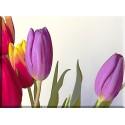 9549-colorido en tulipanes