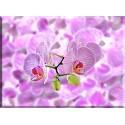 Orquídeas Fondo Abstracto Textura Composición