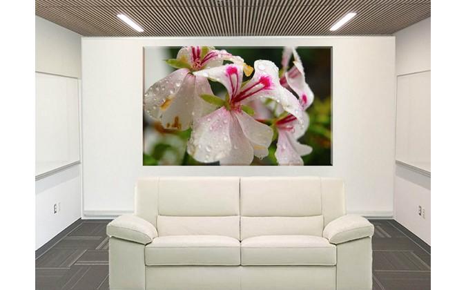 orquidea en flor