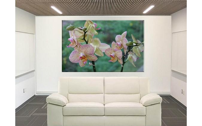 orquidea color rosa
