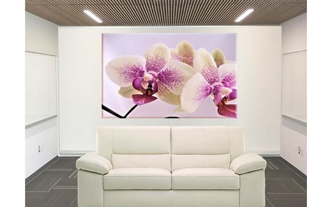 orquidea de bebé