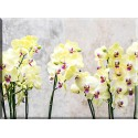 Orquídea Flor Florales Naturaleza Bloom Tropicales