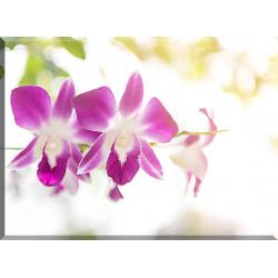 Orquídea Flor Púrpura Florales Decoración Verano