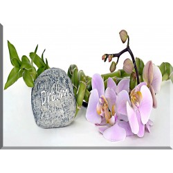 orquideas decoracion-moderna