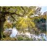 Otoño Lago Rayos De Sol Resplandor Reflexiones_21516