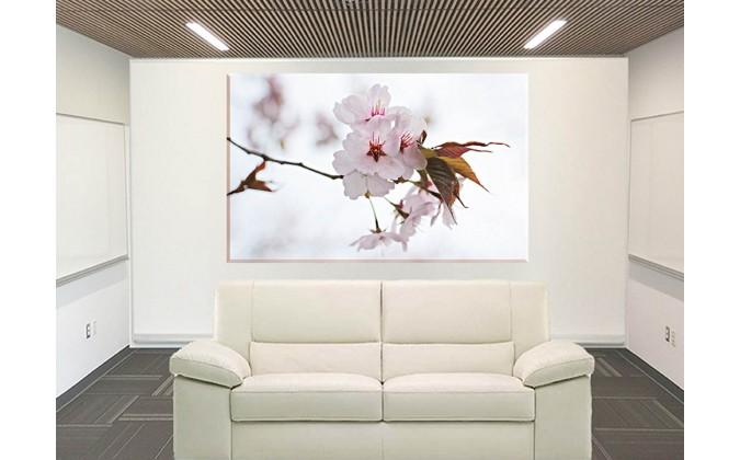 Cerezos Japoneses Flores De Cerezo Japonés_96016