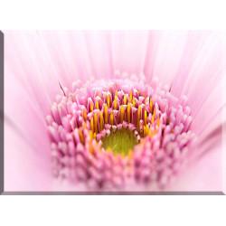 9009-Macro flor rosa