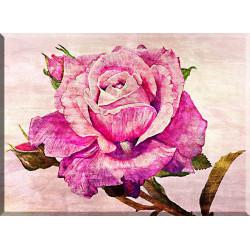9012-Rosa acuarela
