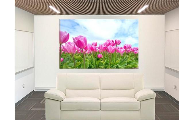 Campo de tulipanes prado flores