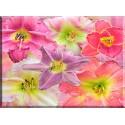 Lirios fondo floral